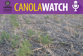 CWP-early-weed-control