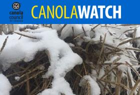 CW-snow