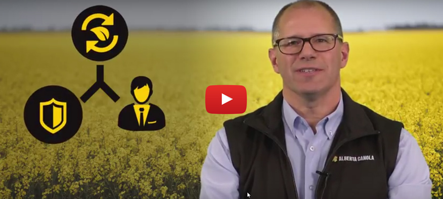 Alberta Canola Year in Review