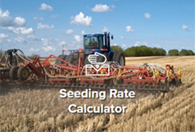 canola seed calculator