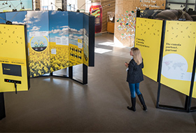 Canola Museum Display